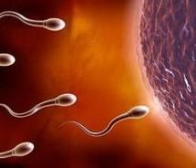 孕產指南:容易受傷的精子
