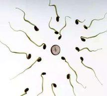 精子成活率低吃什麽